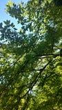 绿化叶茂盛 库存图片