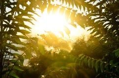 绿化在天空背景的叶子 免版税库存图片