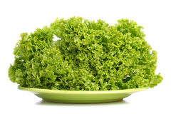 绿化散叶莴苣 免版税库存照片