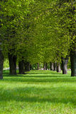 绿化林荫道在公园 免版税库存照片