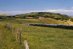 绿化牧场地 图库摄影