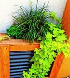 绿化艺术摄影 图库摄影