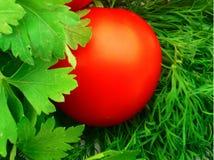 绿化蕃茄 免版税库存照片