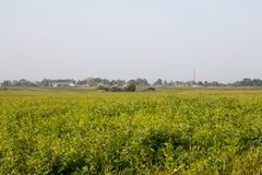 绿化被播种的领域、树和蓝天 免版税图库摄影