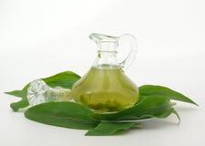 绿化herbsoil 库存照片