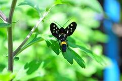 绿叶围拢的一只小昆虫 库存照片
