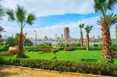 绿叶在开罗,埃及 库存照片
