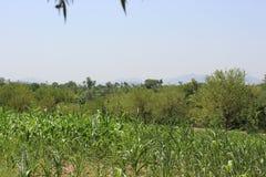 绿叶在Haripur哈扎拉分部,巴基斯坦的北方地区 免版税图库摄影