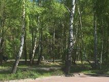 绿叶背景  库存图片