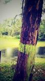 绿叶 图库摄影