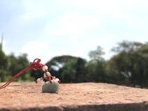 绿宝石龙 图库摄影