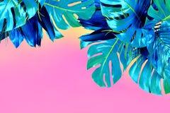 绿松石上色了紧密在桃红色backgroun的各种各样的新鲜的热带叶子 图库摄影