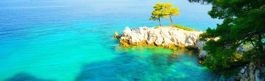 绿松石水、松树和斯科派洛斯岛,希腊岩石海岸线  免版税库存照片