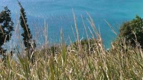 绿松石海通过草 摇摆在风的草 股票视频