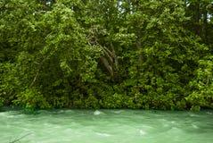 绿河 免版税库存照片