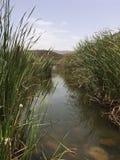 绿洲在摩洛哥撒哈拉大沙漠 免版税库存照片