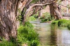 绿洲在沙漠 图库摄影