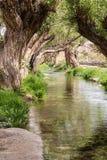 绿洲在沙漠 免版税库存照片