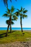 绿洲的棕榈树 免版税库存图片