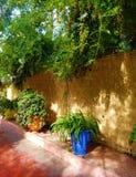 绿洲艺术和环境美化在Majorelle庭院 库存照片