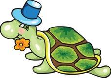绿海龟 免版税图库摄影