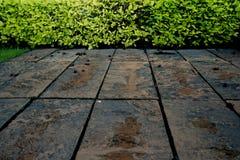 绿色与地面混凝土的灌木墙壁自然纹理背景 库存照片
