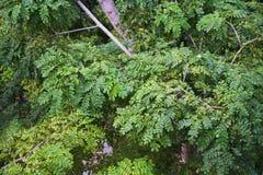 绿色与自然的叶子/植物纹理 库存图片