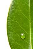 绿色事假和水滴 免版税库存照片