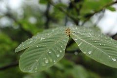 绿色事假在密林 库存照片