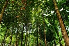 绿色事假在森林里 免版税库存照片