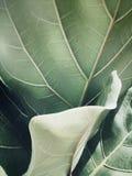 绿色事假植物太阳光的关闭 库存照片