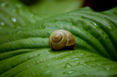 绿色事假蜗牛 库存照片