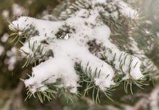 绿色云杉的分支用新鲜的雪包括 免版税图库摄影