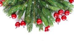 绿色云杉的分支装饰用在白色背景的莓果 新年` s,圣诞节装饰 免版税图库摄影