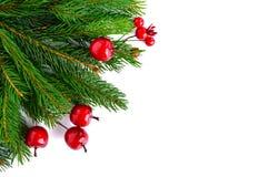 绿色云杉的分支装饰用在白色背景的莓果 新年` s,圣诞节装饰 库存照片