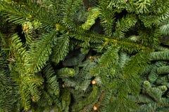 绿色云杉的分支,自然本底 库存图片