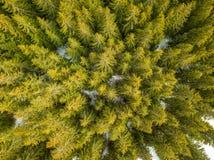 绿色云杉的森林和一些雪在地面上 鸟瞰图 库存照片