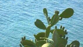 绿色仙人掌仙人掌和蓝色海在背景中挥动 股票视频
