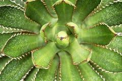 绿色仙人掌花在植物中和美丽 免版税库存照片