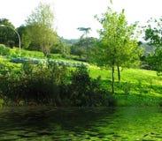 绿色公园 免版税库存照片