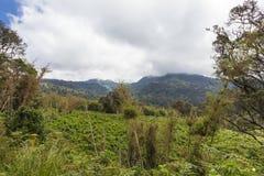 绿色公园Aberdare 肯尼亚,非洲 免版税图库摄影