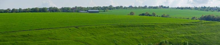 绿色农业领域在春天 免版税库存照片