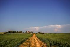 绿色农厂庄稼之间的金黄道路 库存图片