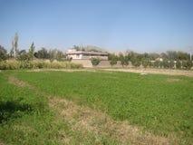 绿色农场在喀布尔 免版税库存图片