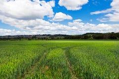 绿色农村横向 免版税库存照片