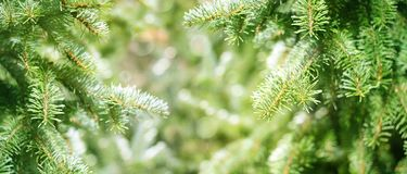 绿色冷杉分支 免版税图库摄影