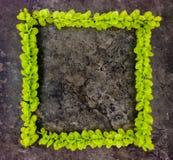 绿色分支明亮的框架在黑暗的石背景的 顶视图 免版税图库摄影