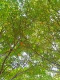绿色分支是明媚的阳光 库存照片