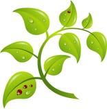 绿色分行结构树,   免版税图库摄影