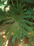 绿色分裂叶子 免版税库存照片